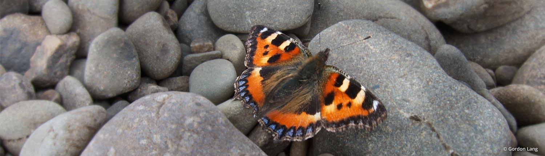 Butterfly: Hypnotherapy Lanark